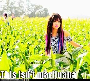 This isn't marijuana