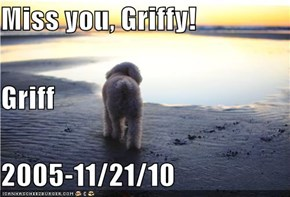 Miss you, Griffy! Griff 2005-11/21/10