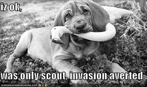 iz ok,  was only scout, invasion averted