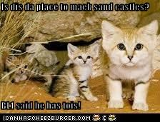 Is dis da place to maek sand castles?  BL1 said he has tois!