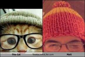 This Cat Totally Looks Like Matt