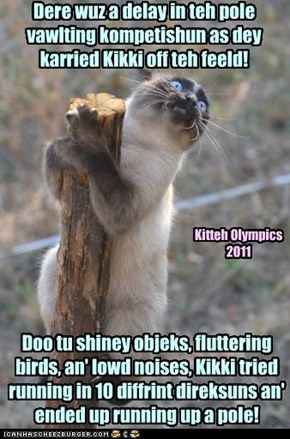 Kitteh Olympics Pole Vawlting