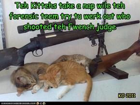 Teh Kittehs take a nap wile teh forensic teem try tu werk out who shooted teh Fwench judge