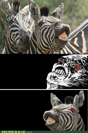 Zebras Hate Raisins