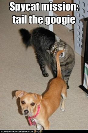 spycats r bery lituhrul