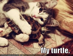 My turtle.