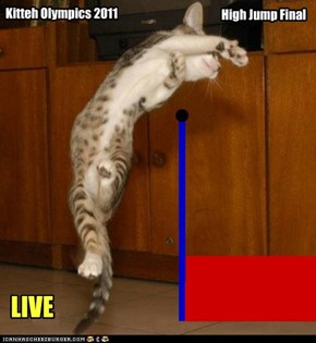 Kitteh Olympics: High Jump Final
