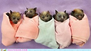 Blanketed Batty Squee