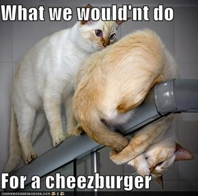What we would'nt do  For a cheezburger