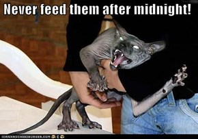 Never feed them after midnight!