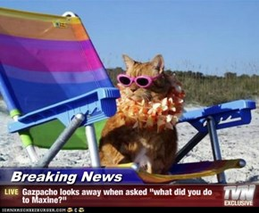 """Breaking News - Gazpacho looks away when asked """"what did you do to Maxine?"""""""