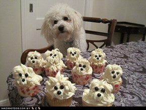 Delishush Pupcakes!