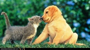 Kittehs R Owr Friends: Love Bitez!