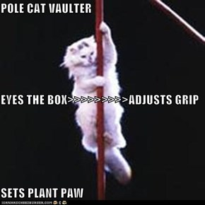 POLE CAT VAULTER  EYES THE BOX>>>>>>>>>ADJUSTS GRIP SETS PLANT PAW