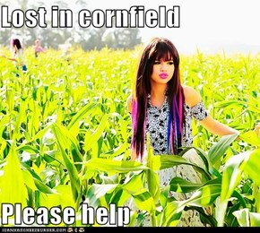 Lost in cornfield  Please help