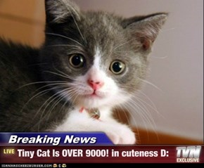 Breaking News - Tiny Cat Is OVER 9000! in cuteness D: