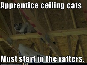 Apprentice ceiling cats  Must start in the rafters.