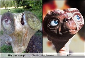 This Tree Stump Totally Looks Like E.T.