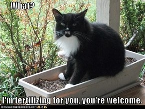 What?   I'm fertilizing for you, you're welcome.