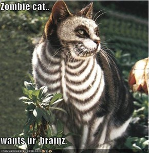 Zombie cat..  wants ur  brainz.