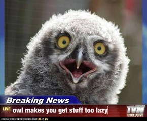 Breaking News - owl makes you get stuff too lazy