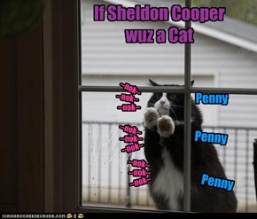 If Sheldon Cooper wuz a Cat