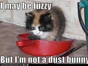 I may be fuzzy  But I'm not a dust bunny...