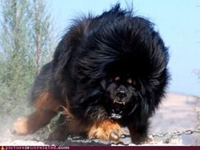 Dog + Bear?