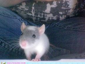 Model ratty.