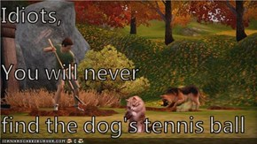 Idiots, You will never find the dog's tennis ball