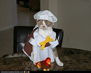 Fanksgibing Kitteh of teh Day: Ai Bettur B Gittin Sum Turkee After Dis...
