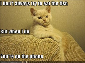 I don't always try to eat the fish But when I do You're on the phone