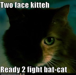 Two face kitteh  Ready 2 fight bat-cat
