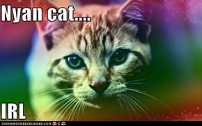 Nyan cat....  IRL