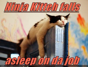 Ninja Kitteh falls  asleep on da job