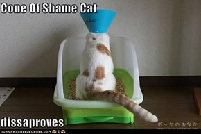 Cone Of Shame Cat  dissaproves