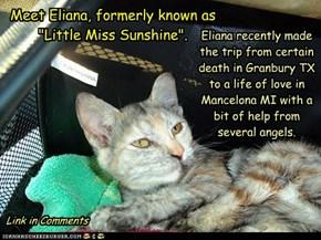 Eliana Goes Home