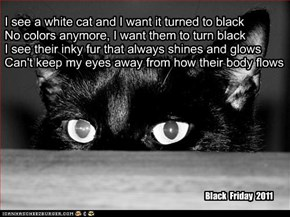 """Turn Kitteh Black"" TTO ""Paint It Black"" by the Rolling Stones"