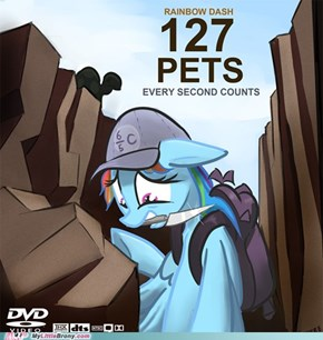 127 pets