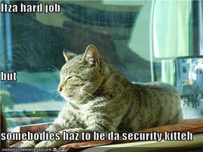 Itza hard job but somebodies haz to be da security kitteh