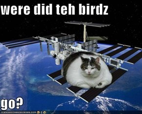 were did teh birdz  go?