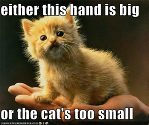either this hand is big  or the cat's too small