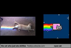 the cat who just ate skittles Totally Looks Like nyan cat