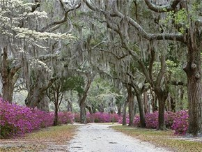 Springtime in Savannah, Georgia USA