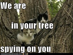 We are in your tree spying on you