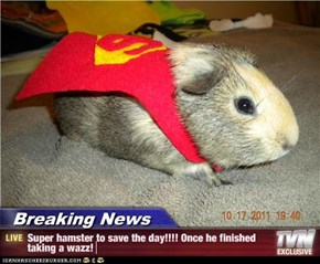 Breaking News - Super hamster to save the day!!!! Once he finished taking a wazz!