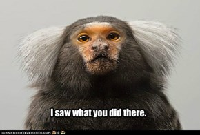 Macaque is not amused