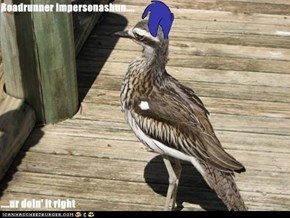 Roadrunner impersonashun....  ....ur doin' it right