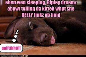 eben wen sleeping, Ripley dreemz abowt telling da kitteh whut she REELY finkz ob him!