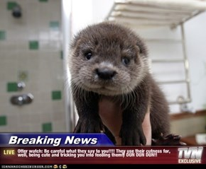 Breaking News - Otter watch: Be careful what they say to you!!!! They use their cutness for, well, being cute and tricking you into feeding them!! DUN DUN DUN!!